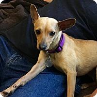 Adopt A Pet :: Elektra - Alpharetta, GA