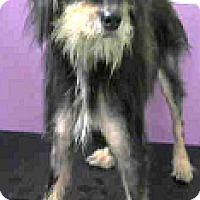 Adopt A Pet :: Ruby - Boulder, CO