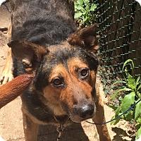 Adopt A Pet :: Louie - Oak Ridge, NJ