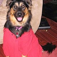 Adopt A Pet :: Roxy - Radford, VA