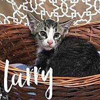 Adopt A Pet :: Larry - Hearne, TX