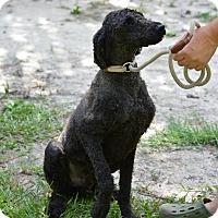 Adopt A Pet :: Raven - Daleville, AL