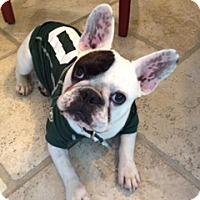 Adopt A Pet :: Nate - Nanuet, NY