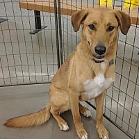 Adopt A Pet :: Sydney - Lakeport, CA