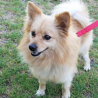 Adopt A Pet :: Ace - Lake Forest, CA