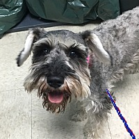 Adopt A Pet :: Pinga bonded with Inga - Las Vegas, NV