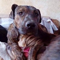Adopt A Pet :: Montgomery - San Francisco, CA