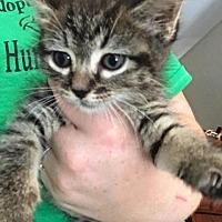 Adopt A Pet :: Pepper - Crocker, MO