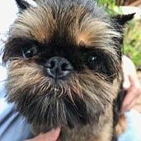 Adopt A Pet :: Minnie - Omaha, NE
