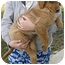 Photo 2 - Golden Retriever Mix Puppy for adoption in Proctorville, Ohio, Ohio - Goldie