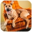 Photo 3 - German Shepherd Dog/Great Dane Mix Dog for adoption in Portland, Oregon - Steven