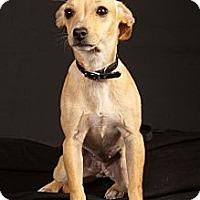 Adopt A Pet :: Missy - Crescent, OK
