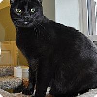 Adopt A Pet :: Quinn - Port Republic, MD