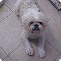 Adopt A Pet :: Ralphie - Cathedral City, CA