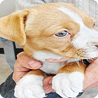 Adopt A Pet :: Queen - San Diego, CA