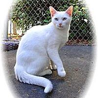 Adopt A Pet :: Snow White - Shelton, WA