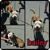 Adopt A Pet :: Bailey - Owasso, OK