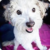Adopt A Pet :: Lucky**Video** - Pasadena, CA