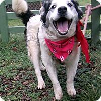 Adopt A Pet :: Odie - Crescent City, CA