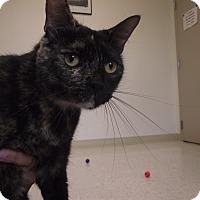 Adopt A Pet :: Amber - Chambersburg, PA
