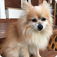 Adopt A Pet :: Charlie - Knoxville, TN