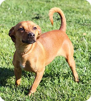 Terrier (Unknown Type, Small) Mix Dog for adoption in Waldorf, Maryland - Reba