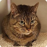 Adopt A Pet :: Dora the Explorer - Grayslake, IL