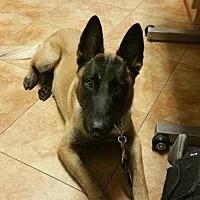 Adopt A Pet :: DALLAS (TH) - Tampa, FL