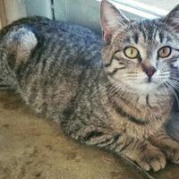 Adopt A Pet :: Saige - Fredericksburg, TX
