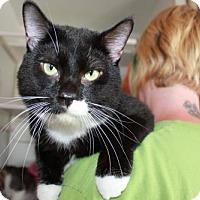 Adopt A Pet :: Ronnie - Erwin, TN