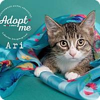 Adopt A Pet :: Ari - Friendswood, TX