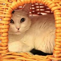 Adopt A Pet :: Zoe - Carrollton, TX