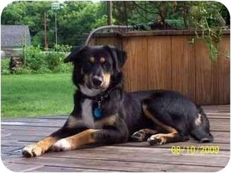 Australian Shepherd Mix Dog for adoption in Stockton, Missouri - Abel