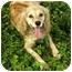 Photo 3 - Cocker Spaniel Dog for adoption in Windham, New Hampshire - Anna