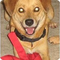 Adopt A Pet :: Harvey - Cincinnati, OH