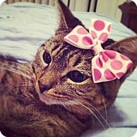 Adopt A Pet :: Lola - Sunrise, FL