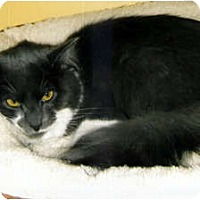 Adopt A Pet :: Chai - Medway, MA