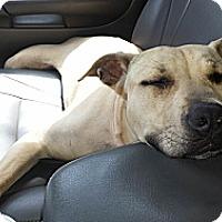 Adopt A Pet :: *Dega - Winder, GA