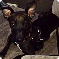 Adopt A Pet :: Astryd - Honolulu, HI