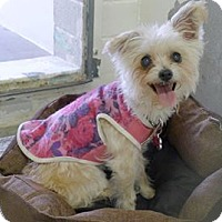 Adopt A Pet :: Tina - Simi Valley, CA