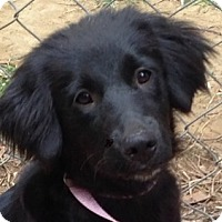 Adopt A Pet :: Annabelle - Allentown, PA