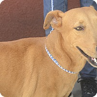 Terrier (Unknown Type, Medium) Mix Dog for adoption in St. Thomas, Virgin Islands - Daisy