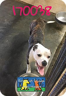 Pit Bull Terrier Mix Dog for adoption in Boston, Massachusetts - KeeKee