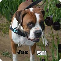 Adopt A Pet :: Jax - Woodinville, WA