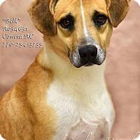 Adopt A Pet :: Belk - Newnan City, GA