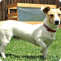 Adopt A Pet :: Max - Boulder, CO