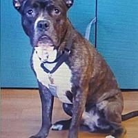 Adopt A Pet :: Teddy - Albertville, MN