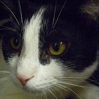 Adopt A Pet :: Cubby - Hamburg, NY
