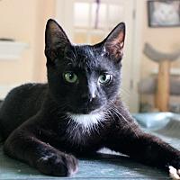Adopt A Pet :: Zeke - Fairfax, VA