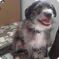 Adopt A Pet :: Mr. Scruffles - Cuero, TX